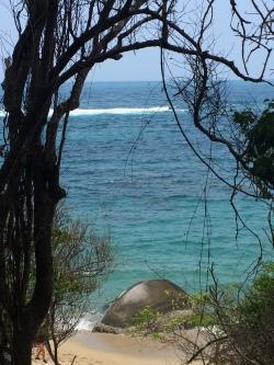 Vines and Ocean