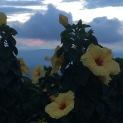 Bucaramanga Flowers