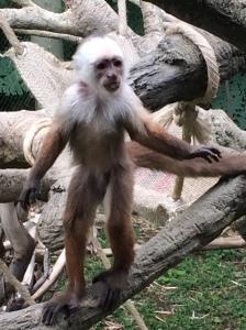 Monkey standing