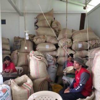 Coffee Farm 3