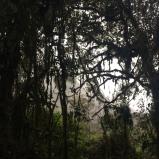 Hiking Trees